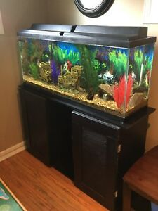 50 gallon fish tank, stand and full accessories for sale