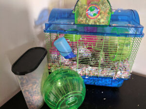 Two Loving Gerbils need a new home ASAP