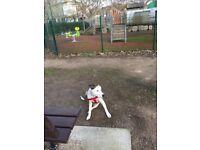 Dog for sale English bullterrior x Staffie