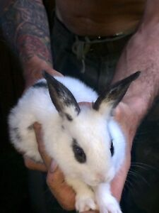 Rabbits for sale 20.00