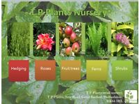 Plants for sale hedging/tree/flowers, we can also plant these for you