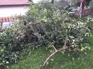 BRANCHES AND OTHER JUNK REMOVAL CALL 780 884 7800