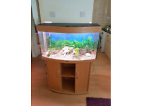 JUWEL VISION BOW FRONTED FISH TANK AND STAND FOR SALE