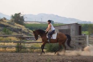 14yr ottb hunter jumper mare Motivated to sell