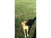 dog walking buddy