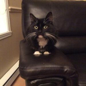Perdu notre chat Dali