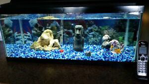 10 Gallon Heated Tank With Roofing - 5 Fish