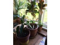 Indoore plants-pot plants (46 plants)