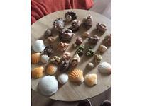 Sea shells, crabs, fish tanks , craft items