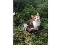 MISSING CAT - Whitefield Terrace/Heaton area