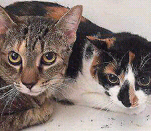 Urgently Foster home or Forever home  Missy and Tika