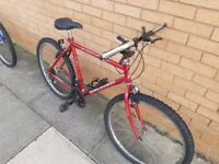 Raleigh Red mountain be with 26 wheel size and 19 inch frame.