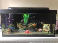 Tetratec 60l fish tank (full set up and fish)