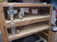 Quail run /cage