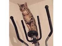CAT MISSING,MALE BENGAL , BRADFORD MOOR AREA .