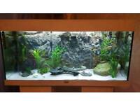180ltr one of a kind tropical fish tank