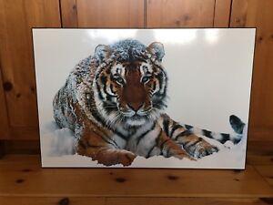 Large plaqued tiger print