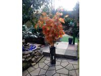 Acer forsale. With mother of pearl planter