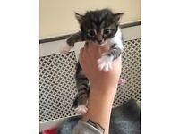 Beautiful hand raised kittens need new homes