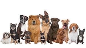 Dog Walking Services!!!