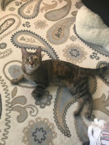 beautiful female cat rehoming for free