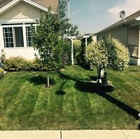 Lawn mowing and other yard services