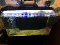 3 foot tank for sale