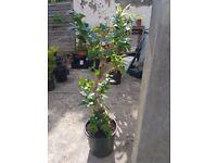 Very nice bonsai tree