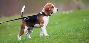 Dog Walking Service . Great Rates, Great Service