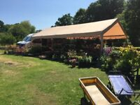 LOW PRICE PLANTS (SHRUBS AND PERENNIALS) AT PULBOROUGH