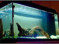 Juwel Rekord 800 110 litre aquarium *High Quality*