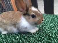 Cute rabbits for sale