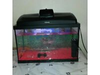 Fish tank with 4 fish fir sale