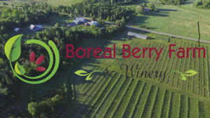 Organic Orchards and Winery for Sale; featuring Haskap
