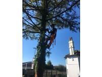 Tree surgeon/gardener