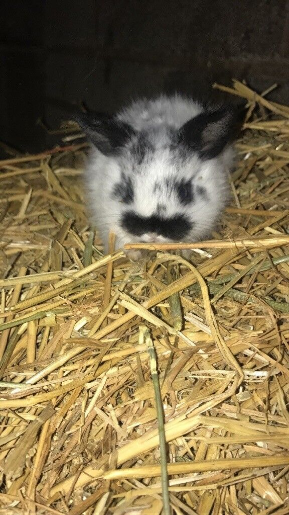 baby english rabbit's ready to leave