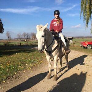 Mule for partboard