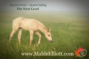 Mable Elliott Horsemanship Services and Guest Ranch