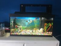 Fish tank with everything in it for sale