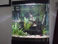 Aqua Style 620T tropical fish tank on black cabinet.