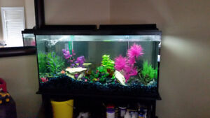 60 Gallon Aquarium with Everything included