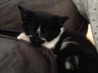 3 gorgeous 8 week old kittens ready now