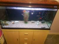300 litre fish tank