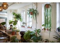 Manager for a busy lunch spot and plant shop on Broadway Market - £25k plus bonus