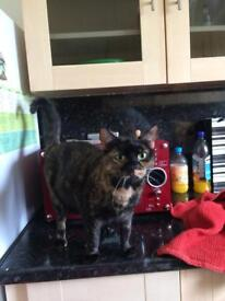 2yr old Female cat in need of a new home
