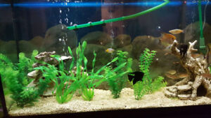 60 Gallon Fish Tank including fish for sale. Includes everything