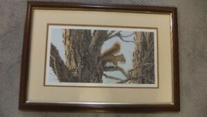 Audrey Casey Framed Numbered Print -Forest Squirrel Red Squirrel