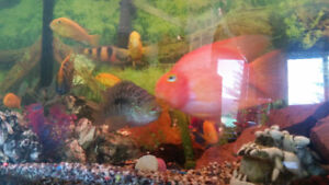 Fish forsale