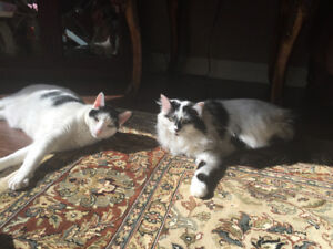 2 Cats looking for a new home.