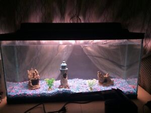 35 gallon fish tank with accessories